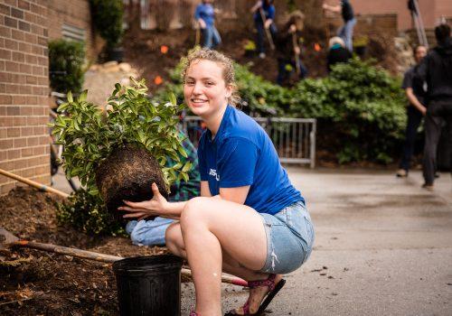 A student planting shrubs.