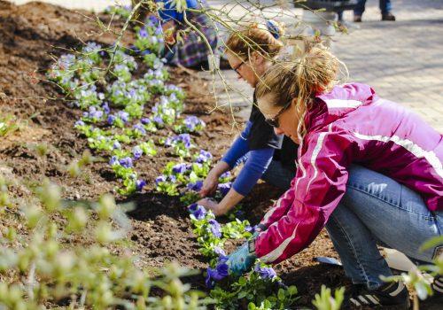 Volunteers planting flowers during Greenfest.
